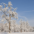 Beautiful Winter Day With Snow Covered Trees And Blue Sky by Matthias Hauser