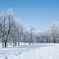 Beautiful Winter Landscape by Dan Radi