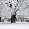 Beautiful Winter Park by Charline Xia