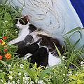 Beauty -  Cat And Kitten by Augusta Stylianou