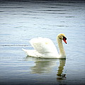 Beauty And Elegance by Laurie Perry