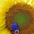 Beauty And The Bee by Laura Corebello
