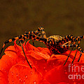 Beauty And The Bug by Lorenzo Williams