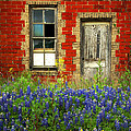 Beauty And The Door - Texas Bluebonnets Wildflowers Landscape Door Flowers by Jon Holiday