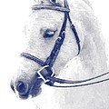 Beauty In A Bridle by Alice Gipson