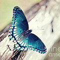 Beauty In Blue by Thereasa Gwinn