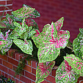 Beauty In Decorative Foliage by Linda Phelps