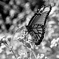 Butterfly Beauty In Nature by Kristina Deane