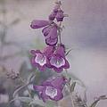 Beauty In Purple by Kim Hojnacki