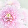 Beauty Iv by Sharon Mau