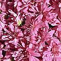 Beauty Of Pink by Elvis Vaughn