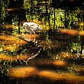 Beauty Of The Bog by Karen Wiles