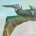 Beauty Of The Pelican by Deborah Benoit