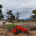 Beauty On 25 Mesa Panoramic by Ernie Echols