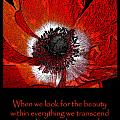 Beauty Red Anenome by Victoria Page