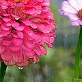 Beauty Showing Through The Rain by Selma Glunn