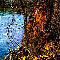 Beaver Does It. by Jeff Kurtz
