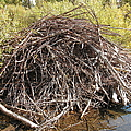 Beaver Lodge by Sandra Williams
