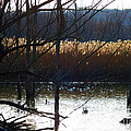 Beaver Marsh in Cuyahoga Valley National Park