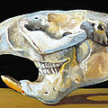 Beaver Skull 1 by Catherine Twomey