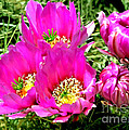 Beaver Tail Cactus Painting by Bob and Nadine Johnston