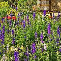 Becker Vineyards' Flower Garden by Priscilla Burgers