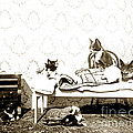 Bed Time For Kitty Cats Histrica Photo Circa 1900 by California Views Mr Pat Hathaway Archives