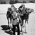 Bedouin Camel Minder Recieves Call On A Mobile Phone With Camels In The Sahara Desert At Douz Tunisia by Joe Fox