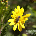 Bee And Flower by M Valeriano
