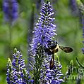 Bee Blue by Nava Thompson