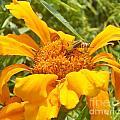 Bee Bold 3 Of 3 by Sandra Schroeder