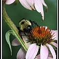 Bee Brunch I by Brenda McGee-Paap