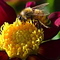 Bee Business by Jeri lyn Chevalier