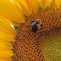 Bee Business by Kristopher Schoenleber