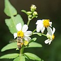 Bee-flower Pollen by Miguel Hernandez