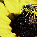 Bee by George Davidson