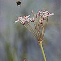 Bee Gone by Jeff Swanson