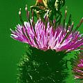 Bee In A Green Ambiance by Patrick Kessler