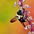 Bee by Jill Jacobs