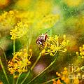Bee by Justyna JBJart