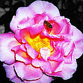 Bee Landing by Paul Wilford