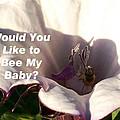 Bee My Baby by Belinda Lee