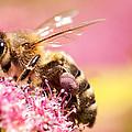 Bee On A Flower by Konstantin Bernatovich