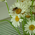 Honey Bee On Daisy Print Photo For Sale by Diane Jorstad