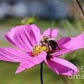 Bee On Flower by Tabitha Godin