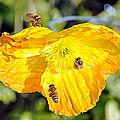 Bee Scene by AJ  Schibig