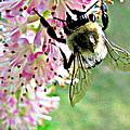 Bee by Selma Glunn