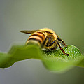Bee Still by Susan Capuano