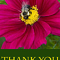 Bee Thank You by Chris Scroggins