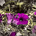 Bee To A Flower by Tom Gari Gallery-Three-Photography